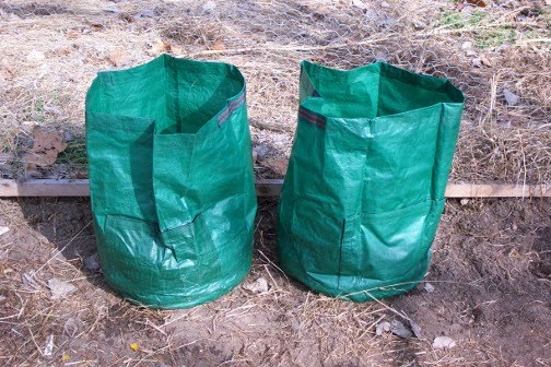 how to grow early potatoes in bags